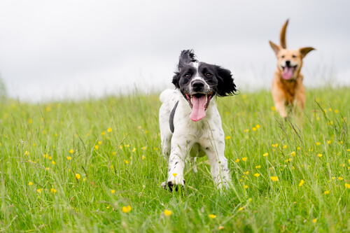 Keep your dog healthy with the right dog food.